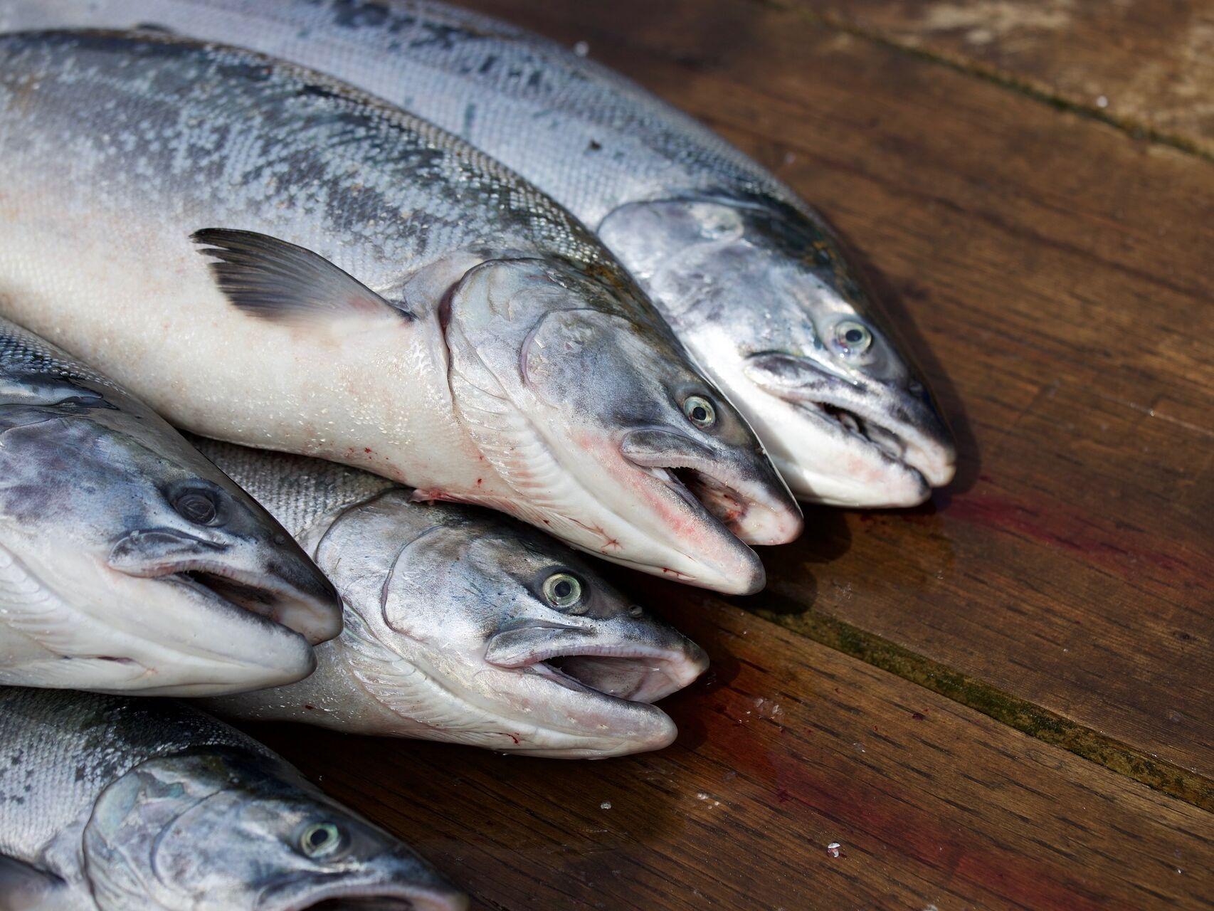 pescado fecha captura